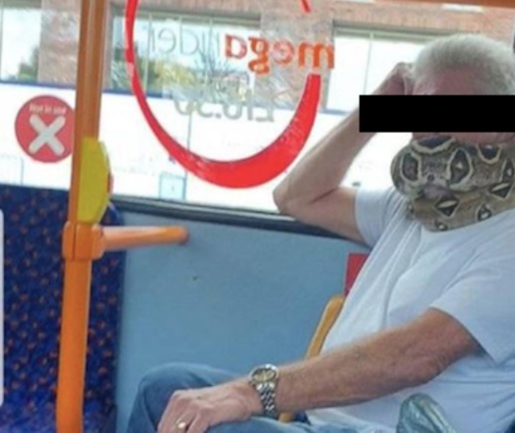 A falta de cubrebocas hombre utiliza a su serpiente como máscara. Noticias en tiempo real