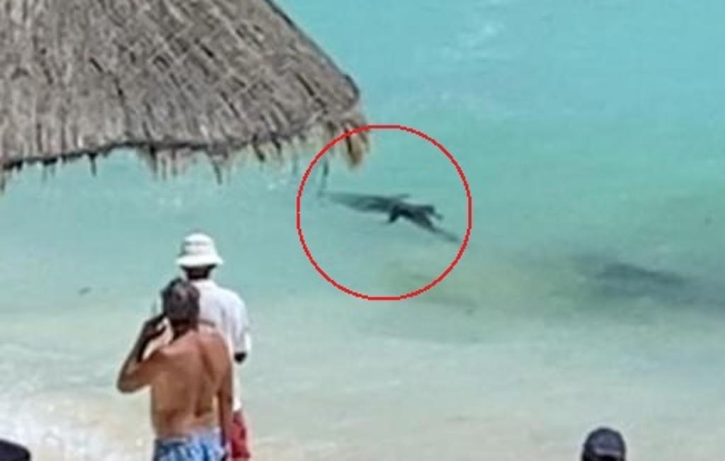 Captan a cocodrilo bebé nadando en playa de Cancún. Noticias en tiempo real