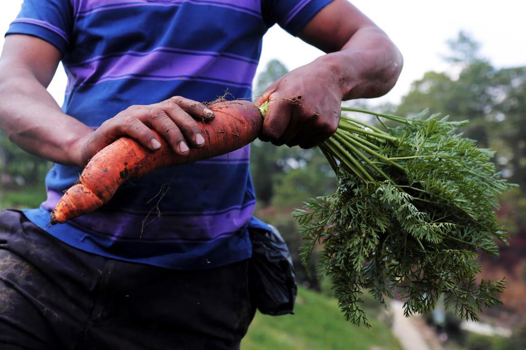 Descubre qué beneficios a la salud aporta el consumo de zanahoria. Noticias en tiempo real