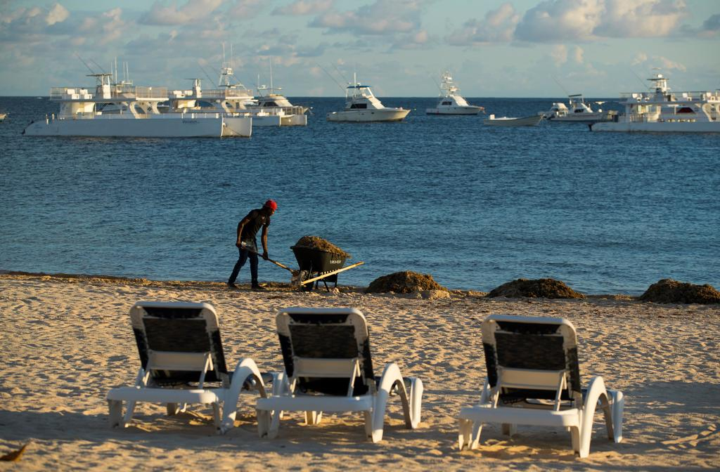Recolectan casi 18 mil toneladas de sargazo en playas de Quintana Roo. Noticias en tiempo real
