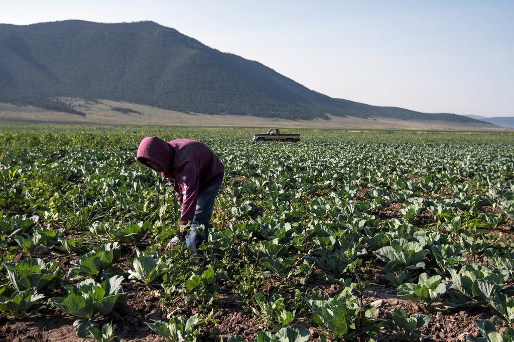 Austeridad de la 4T deja al sector agro desvalido de seguro. Noticias en tiempo real