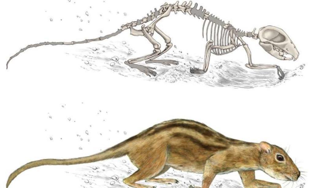 Mamiferos De La Epoca De Los Dinosaurios Tenian Comportamiento Social El Siglo De Torreon Ver más ideas sobre dinosaurios, unidad didactica, dinosaurios preescolar. comportamiento social