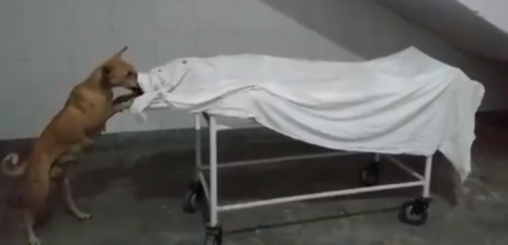 Graban a un perro mordiendo el cuerpo de niña difunta en un hospital. Noticias en tiempo real