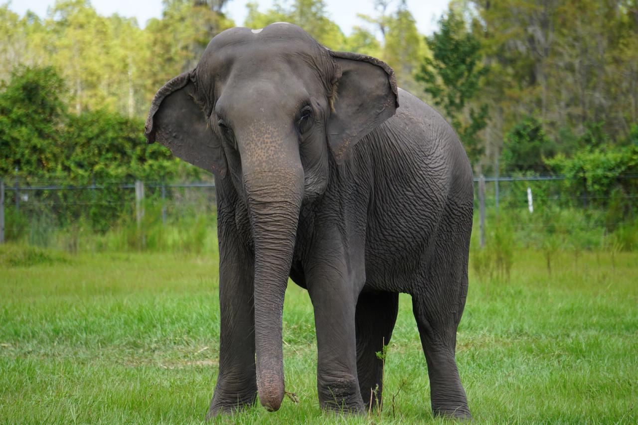 Turista muere pisoteado por elefanta en parque de Zimbabue. Noticias en tiempo real